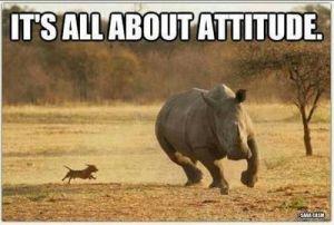 dog chasing rhino