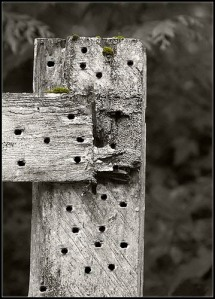 more-nail-with-holes-in-fence